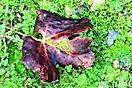 26° Autunno - il colore delle foglie