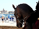 Cavalcata algherese 2010 - GMB 07 (1)